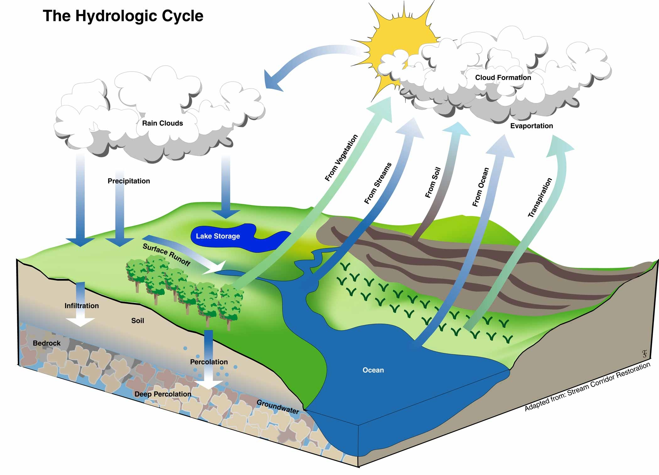 diagram of the Hydrologic Cycle